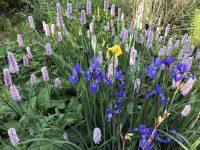 Bog-garden-5962