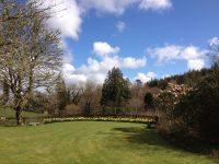 Daffodils in Heathercombe North Garden