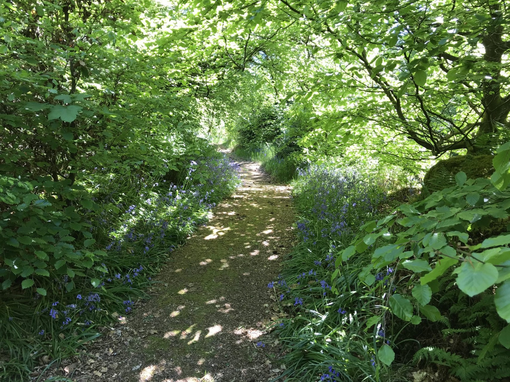 The Path through Bluebell Wood
