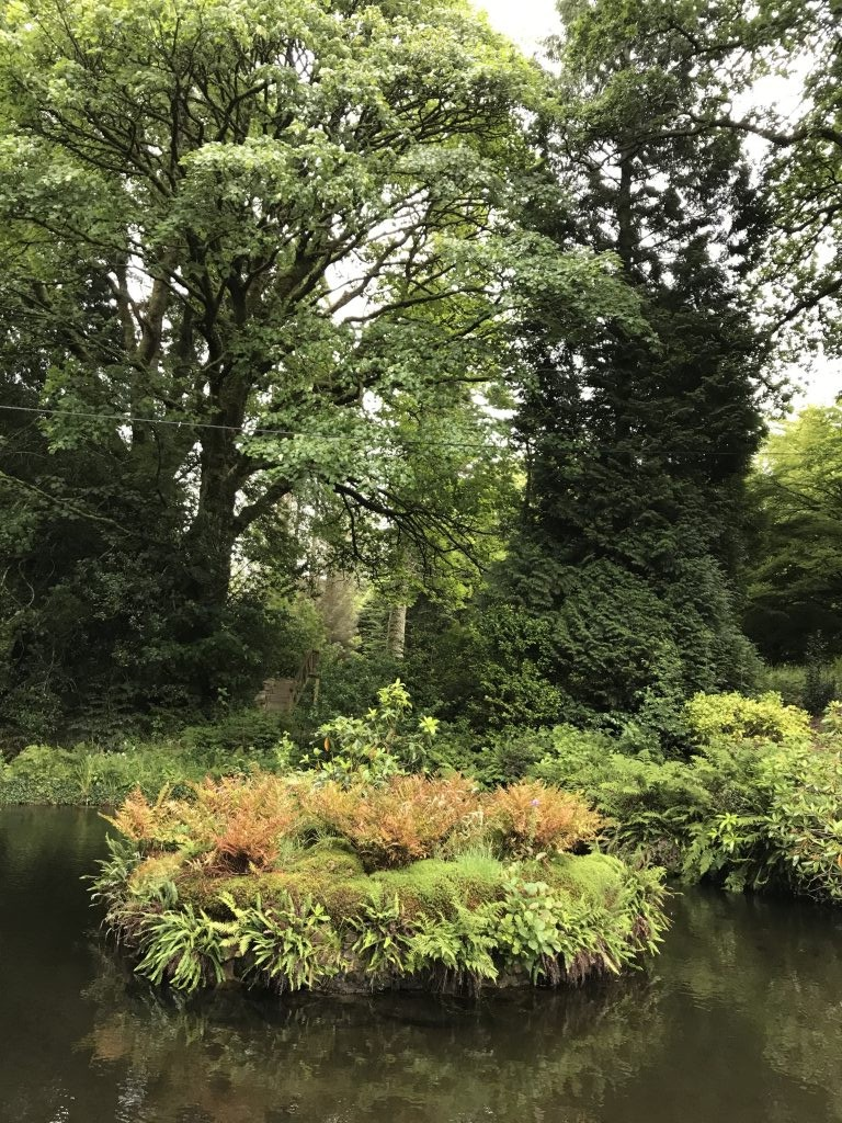 Fern Island on Duck Pond