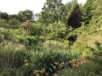 Late Summer in the Bog Garden