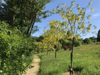 trees-path