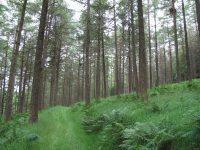 woodlands-1837