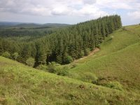 woodlands-2380
