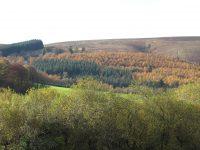 woodlands-2766