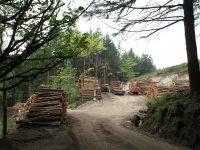 woodlands-3351