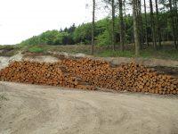 woodlands-3355