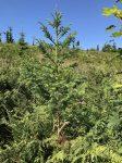 woodlands-6056