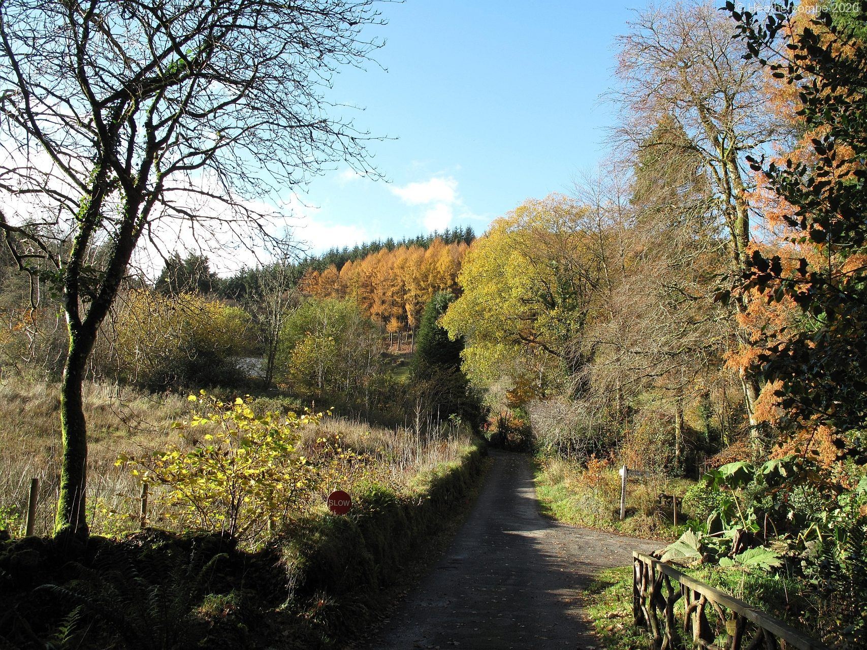 woodlands-2777